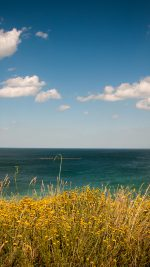 Sea Cloud Flower Nature