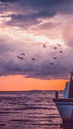Sea Sunset Birds Sky Ocean Ship Nature Flare