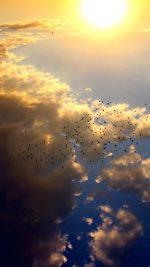 Sky Bird Fly Summer Sun Nature