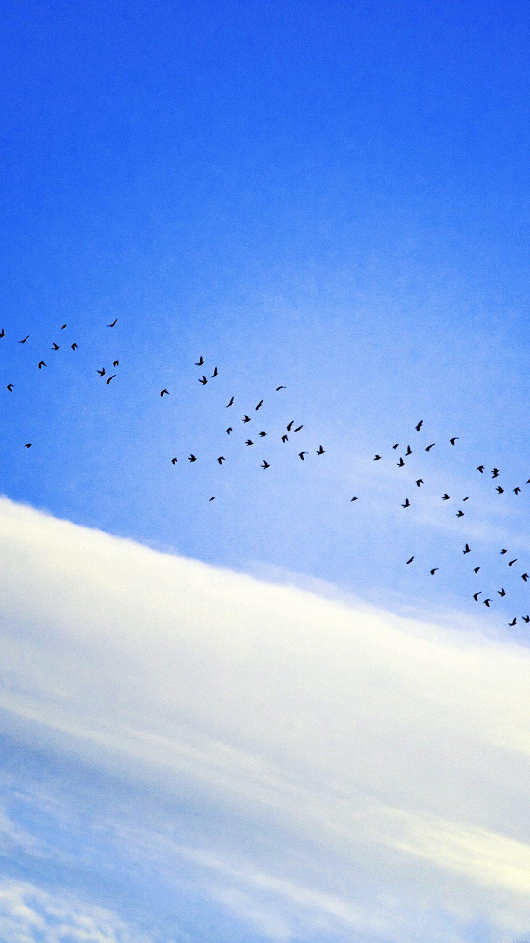 Sky Cloud Birds Blue Fly Nature