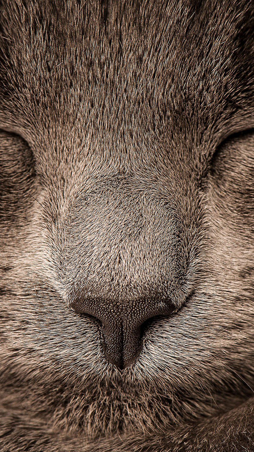 Sleeping Cat Zoom Nature