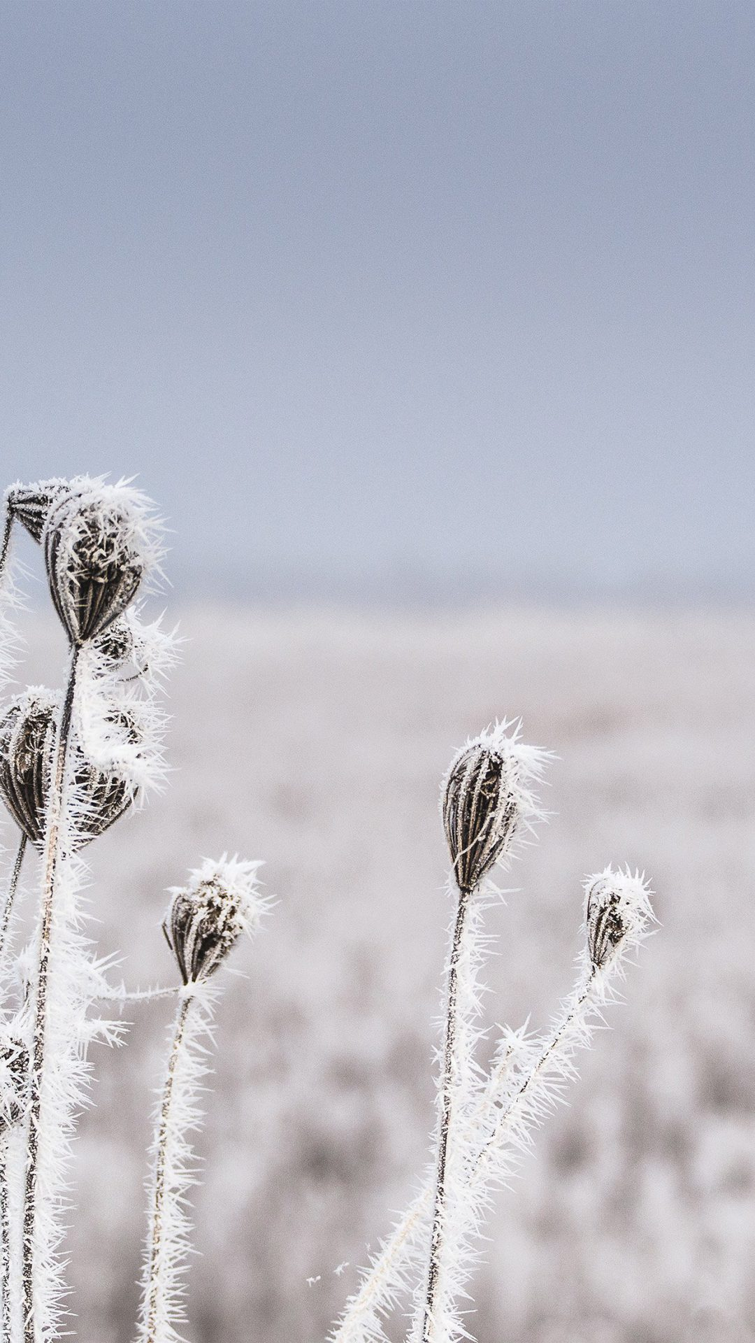 Snow Winter Flower Bokeh Nature