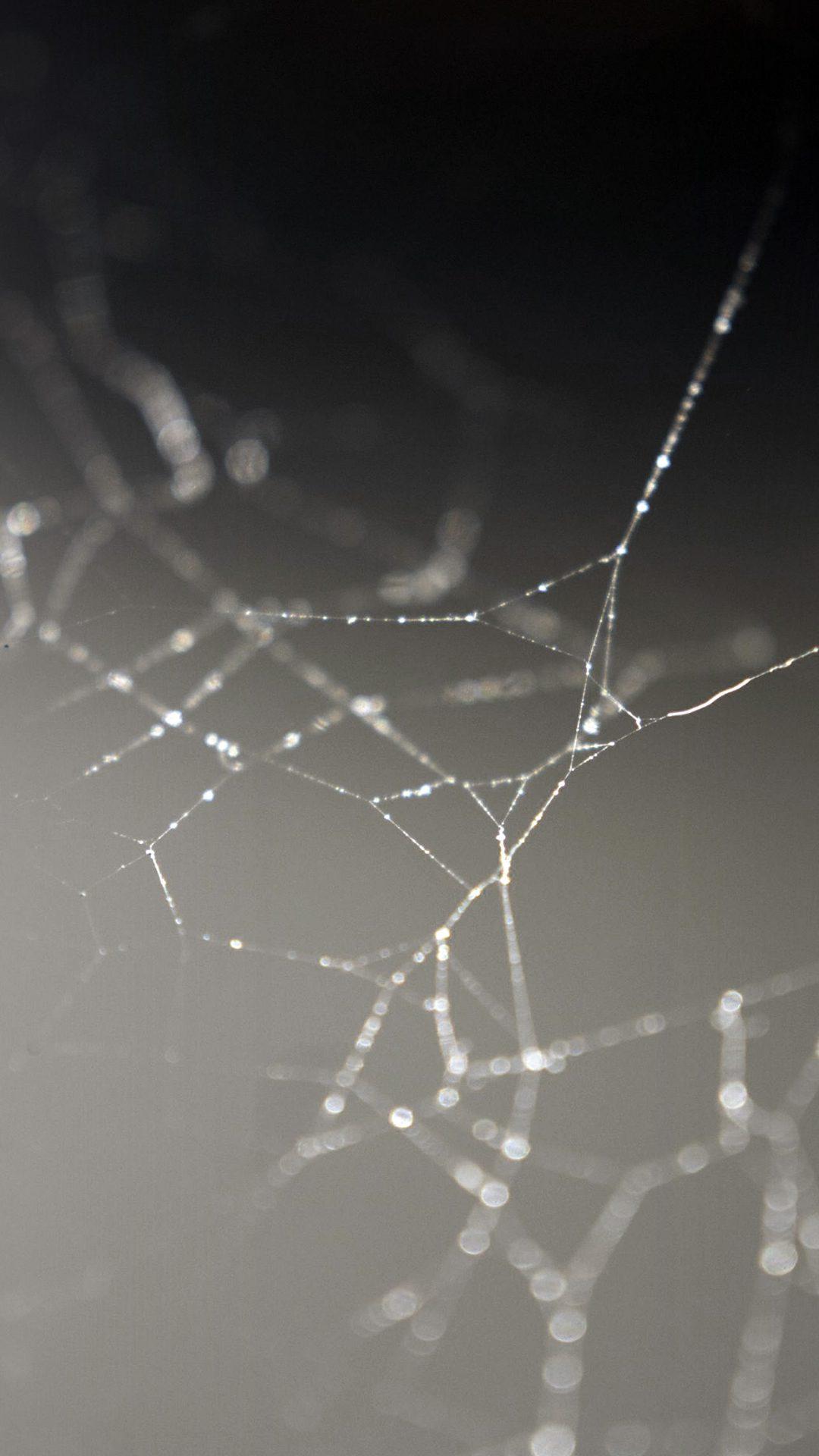 Spider Web Nature Rain Water Pattern Bw