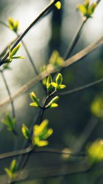 Spring Leave Green Nature Bokeh Tree