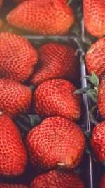 Strawberry Red Fruit Nature Spring Flare Delicious