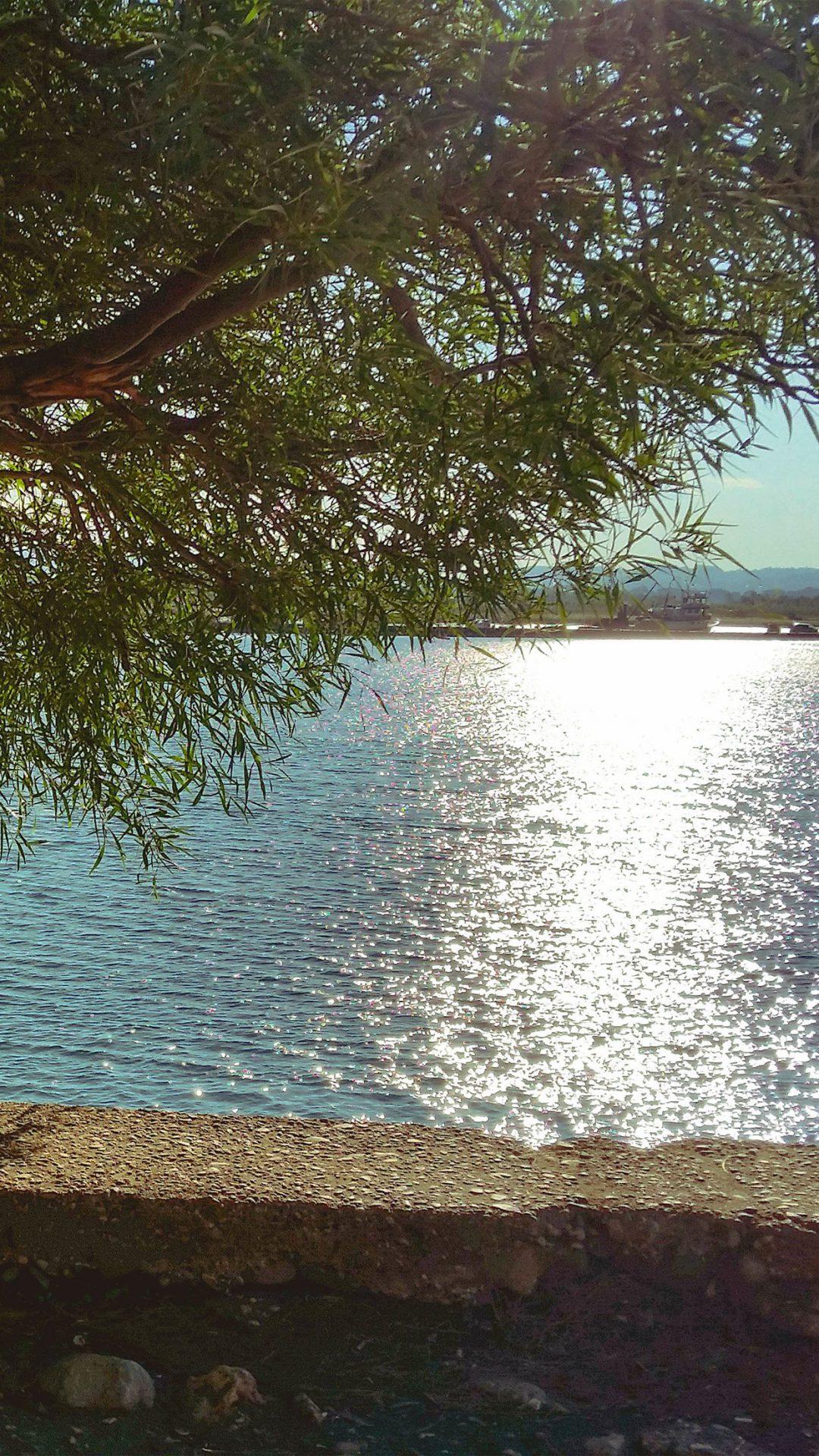 Summer Lake View Tree Sunshine Nature