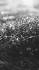Sun Rise Green Leaf Bw Flower Grass Love Nature