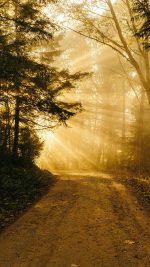 Sunny Road Wood Forest Light Tree Nature Gold
