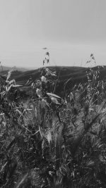 Sunny Summer Day Green Grass Nature Mountain Bw Dark