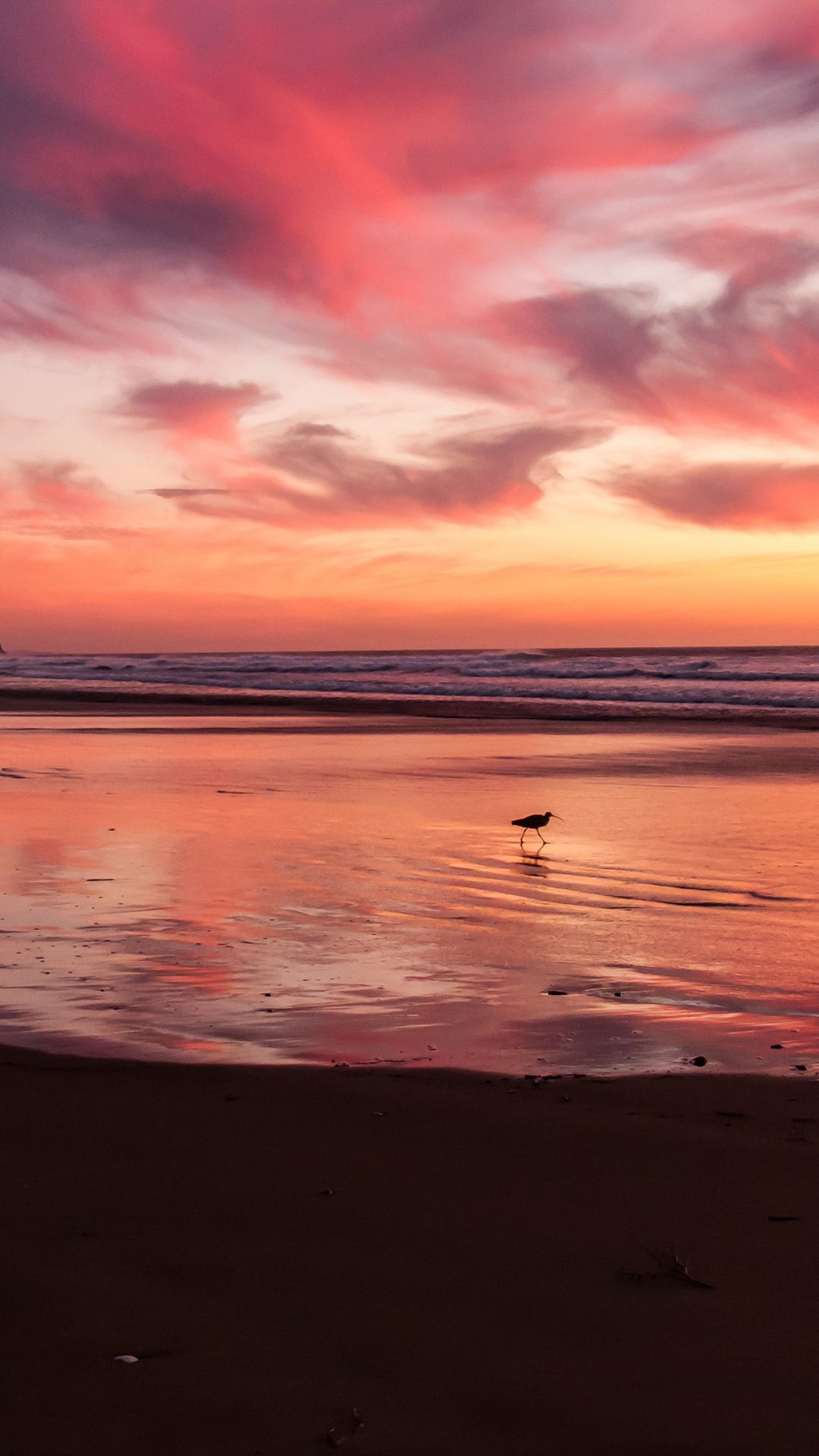Sunset Beach Bird Red Orange Nature Sea