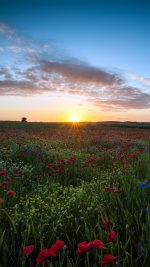 Sunset Flower Nature Color Sky