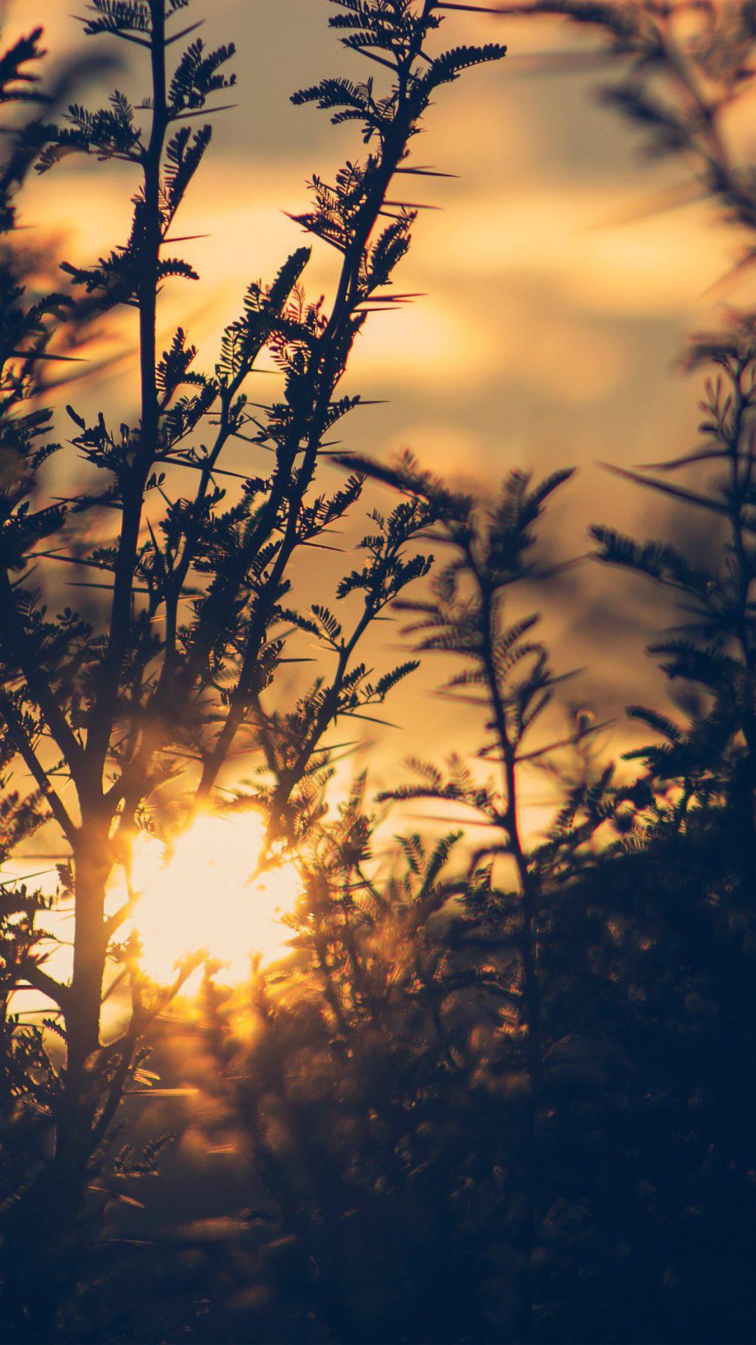 Sunset Tree Light Flare Bokeh Nature Photo