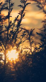 Sunset Tree Light Flare Bokeh Nature Photo
