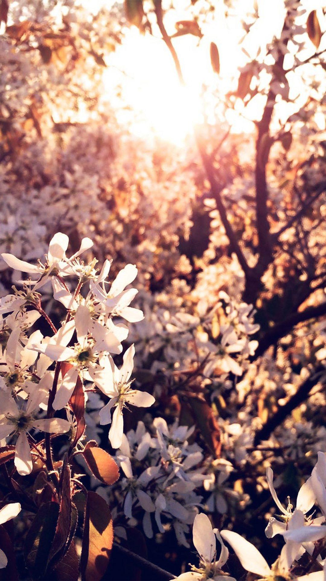 Tree Flower Blossom Spring Nature