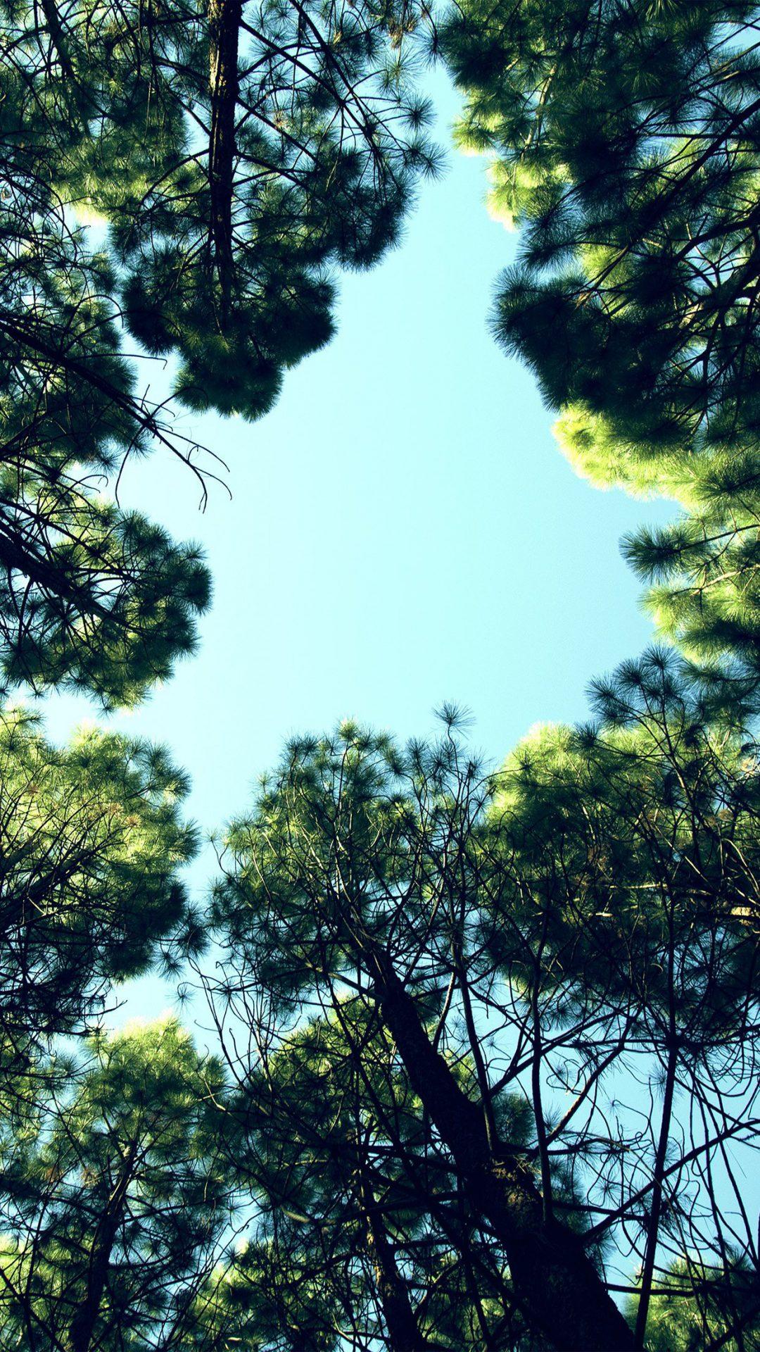 Tree Mountain Sky Wood Nature Green