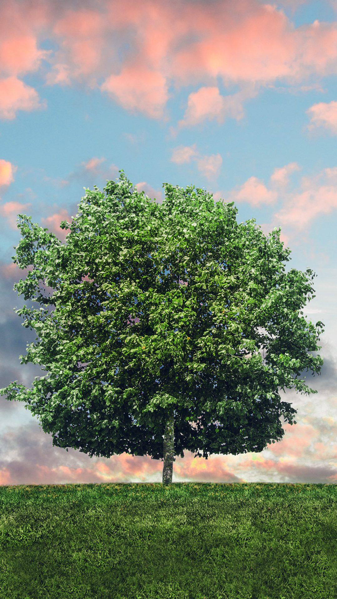 Tree Nature Solo Nature Green