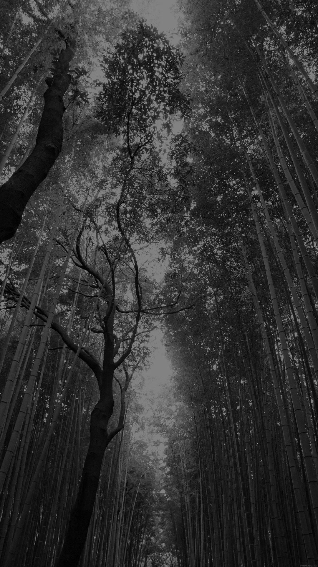 Tree Walk Street Nature Mountain Air Dark