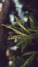 Tree Winter Light Bokeh Life Mountain Nature