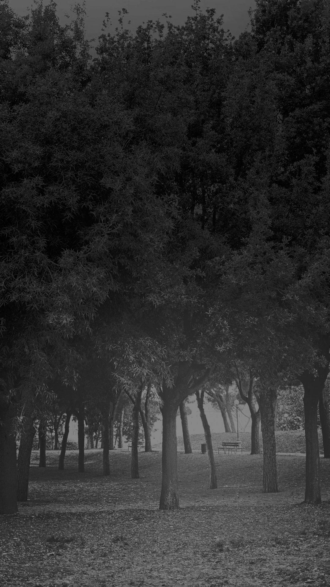 Tree Wood Grass Garden Dark Sun Light Nature Bw