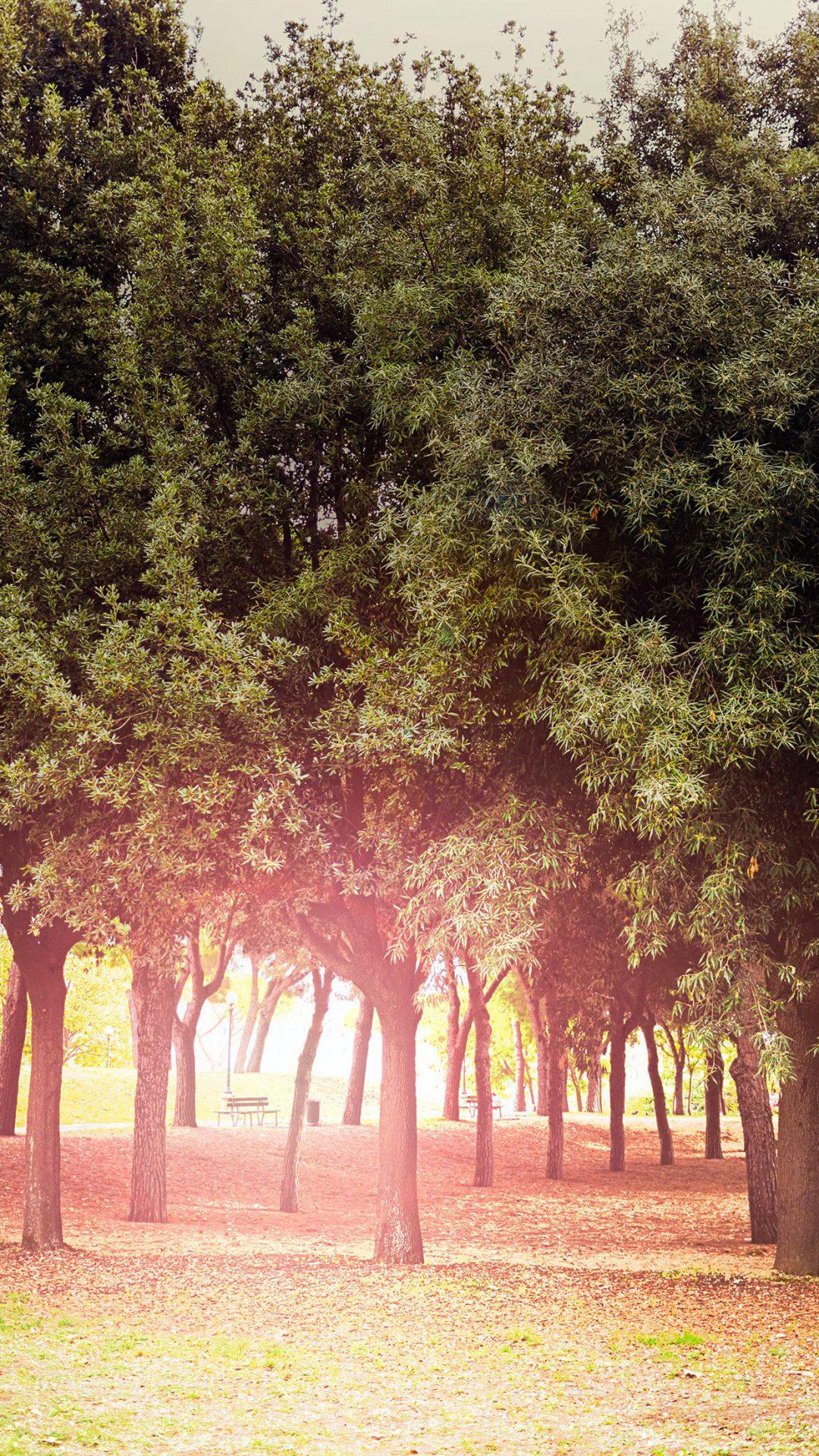 Tree Wood Grass Garden Sun Light Nature Park