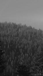Tree Wood Mountain Nature Dark Bw