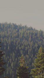 Tree Wood Mountain Nature Green
