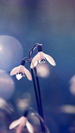 Uknown Flower Blue Bokeh Flare Nature