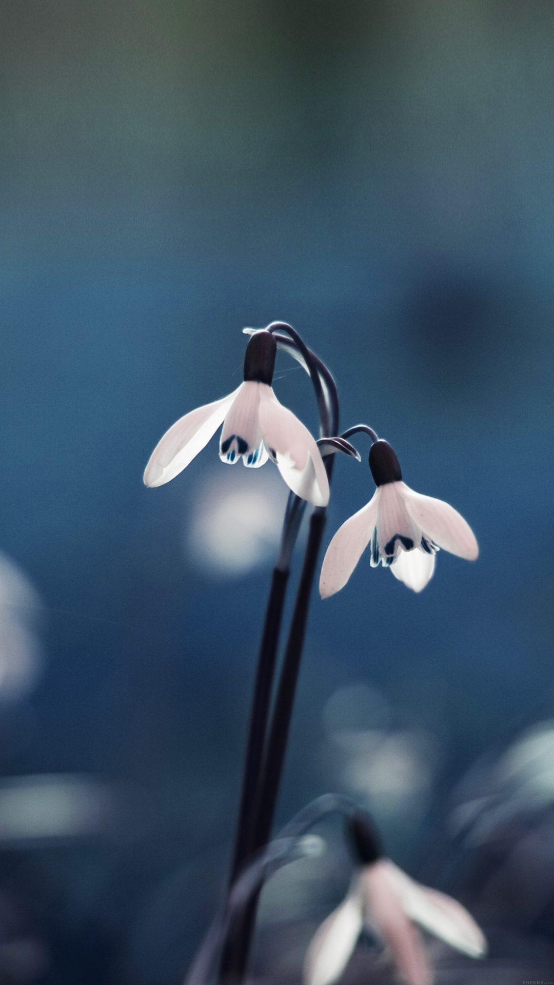 Uknown Flower Blue Bokeh Nature