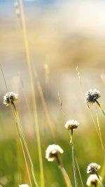 Wallpaper Flower Dandelion Green Nature