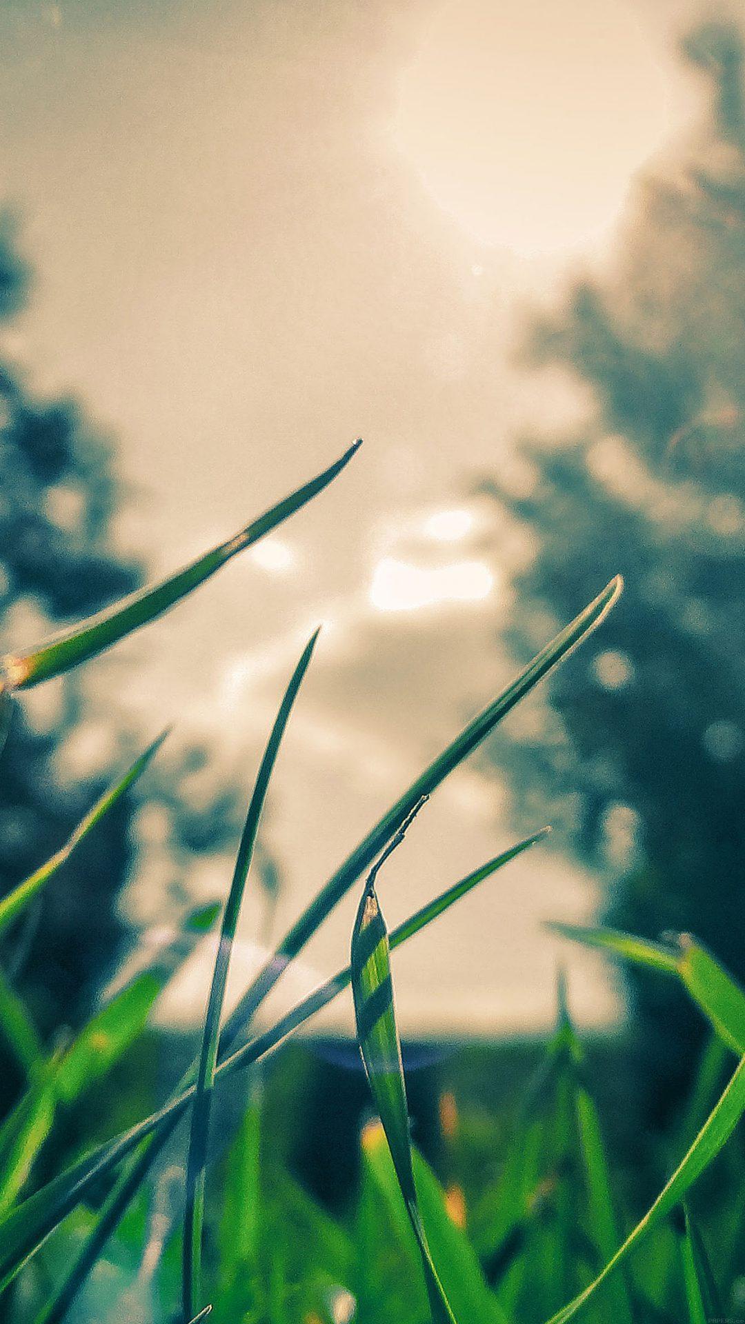 Wallpaper Grass Sunshine Leaf Nature