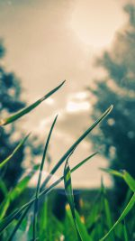Wallpaper Grass Sunshine Leaf Nature