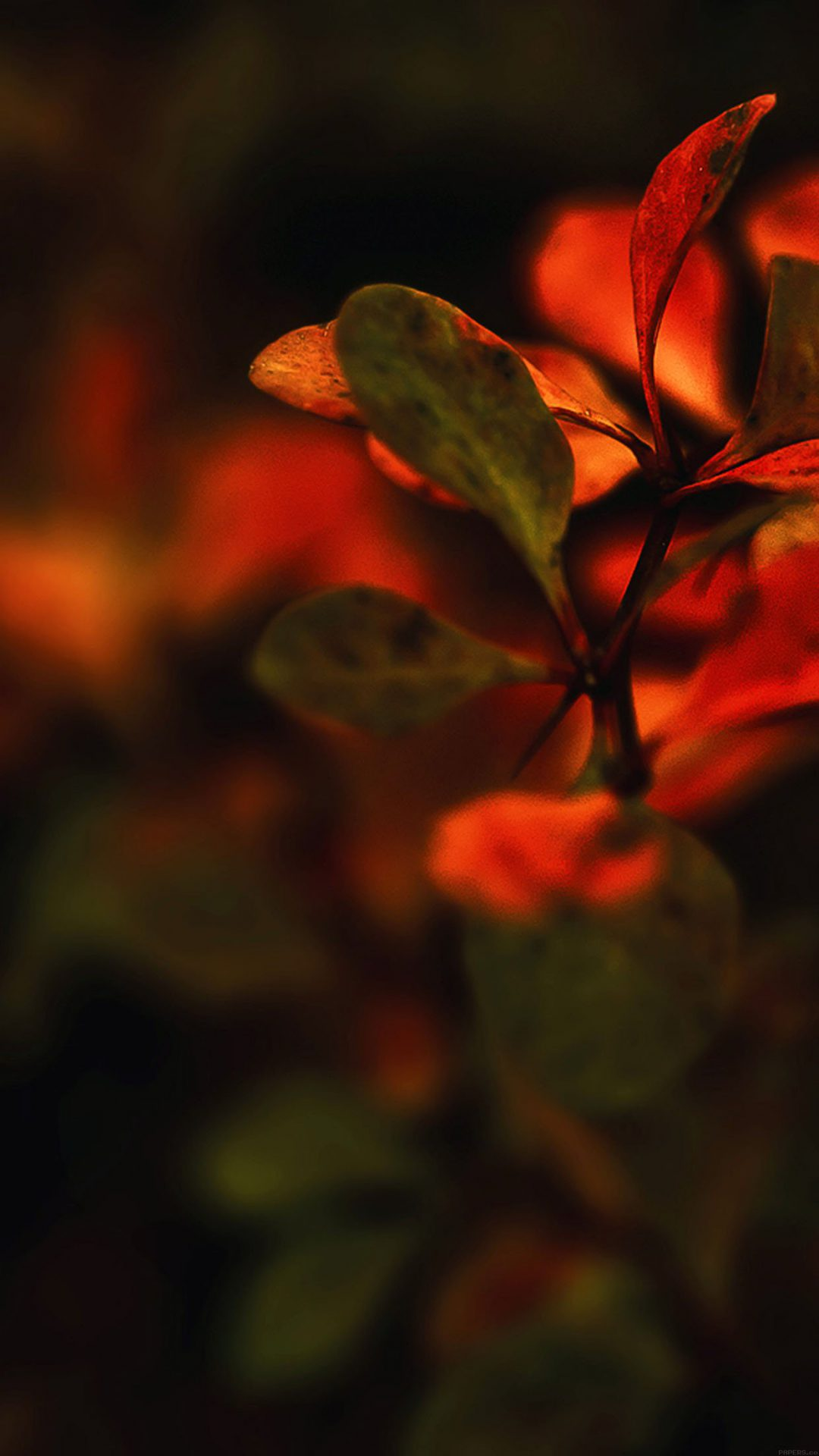 Wallpaper Red Flowers Nature