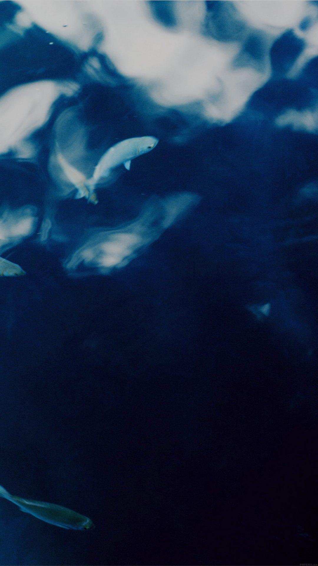 Water Lake Fish Nature Indigo Blue