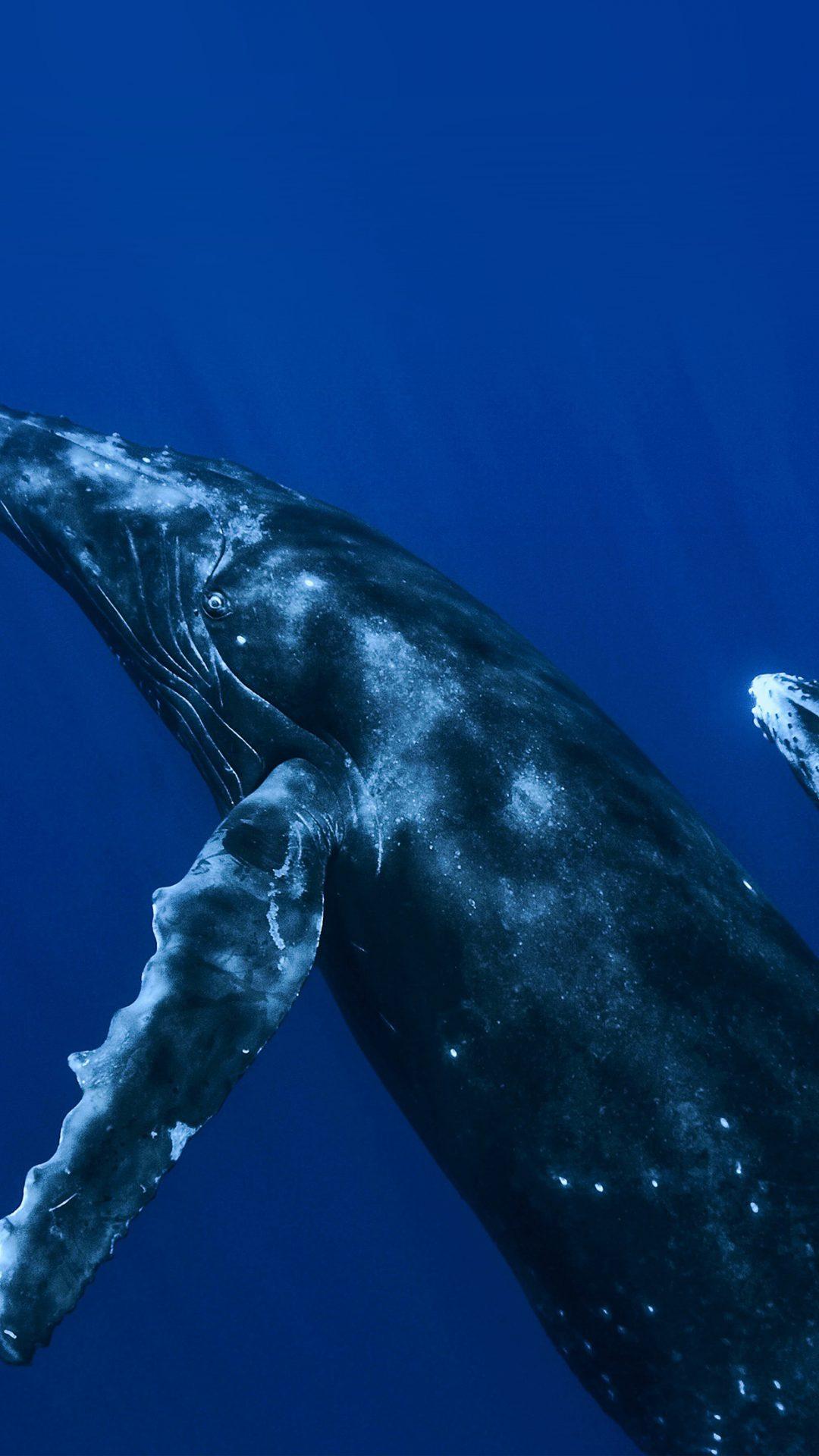 Whale Blue Art Nature Pattern
