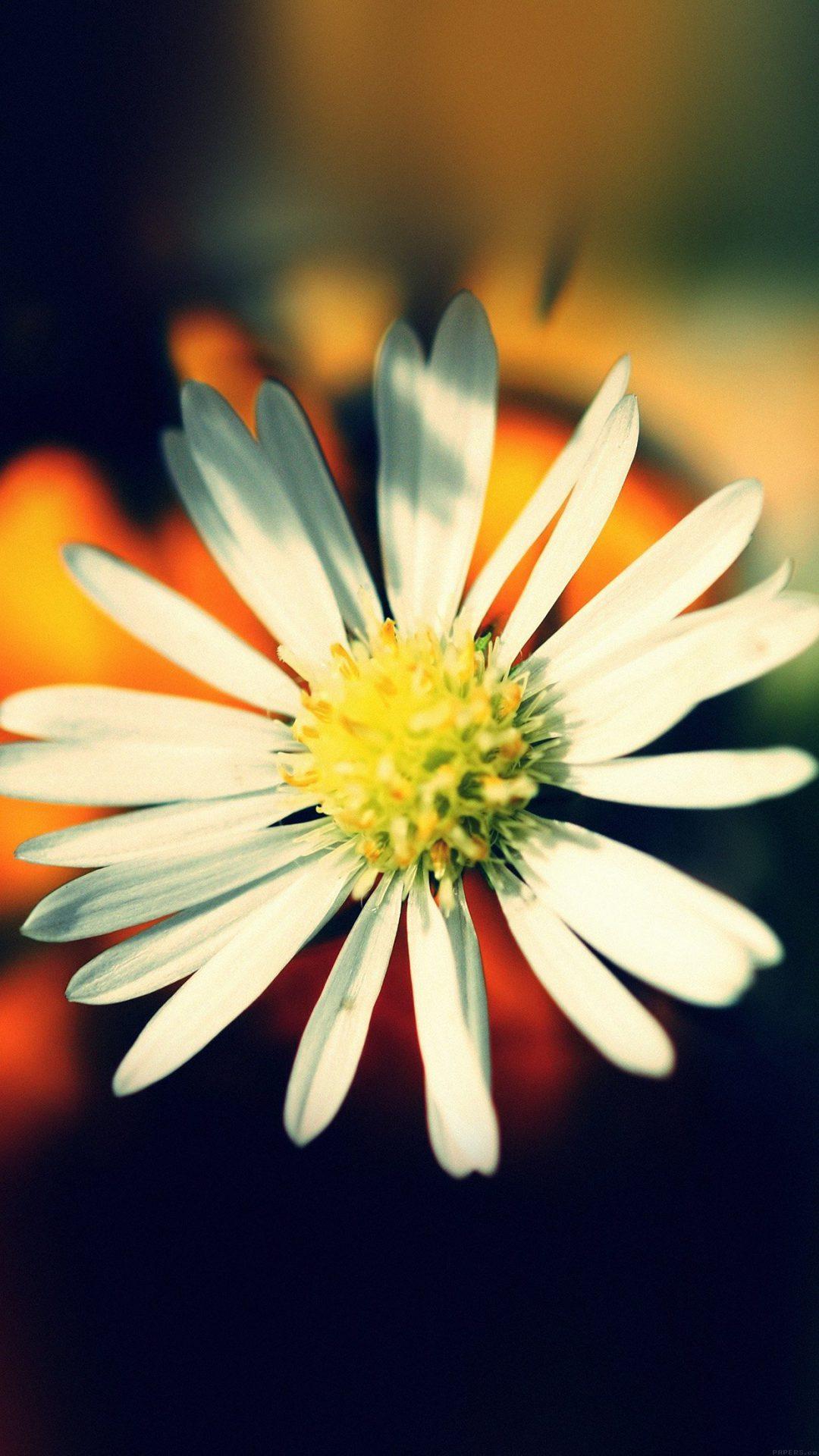 White Flower Nature