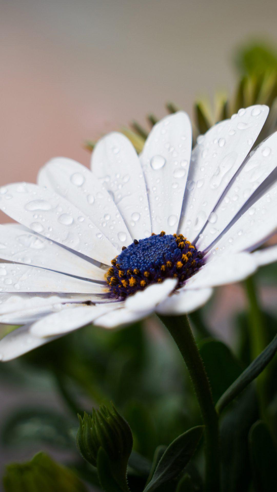 White Flower Nature Spring Rain