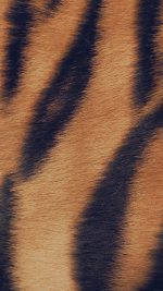 Wild Cat Texture Fur Nature Pattern