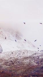 Winter Mountain Bird Rene Reichelt Flare Nature
