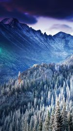 Winter Mountain Blue Woods Tree Nature Cold