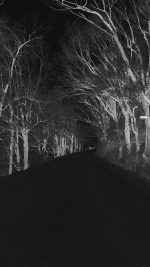 Winter Scary Road Nature Mountain Dark
