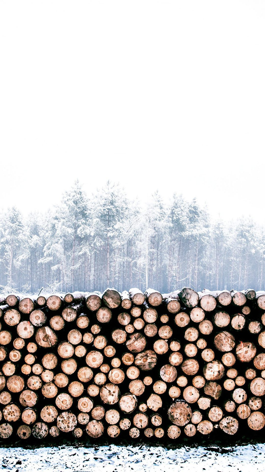 Winter Snow Wood Forest Nature