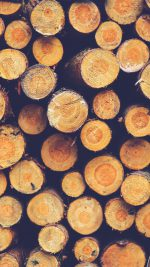 Wood Circle Piles Nature Blue Pattern