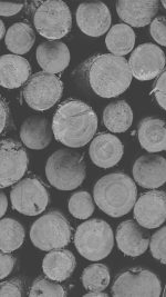 Wood Circle Piles Nature White Dark Bw Pattern