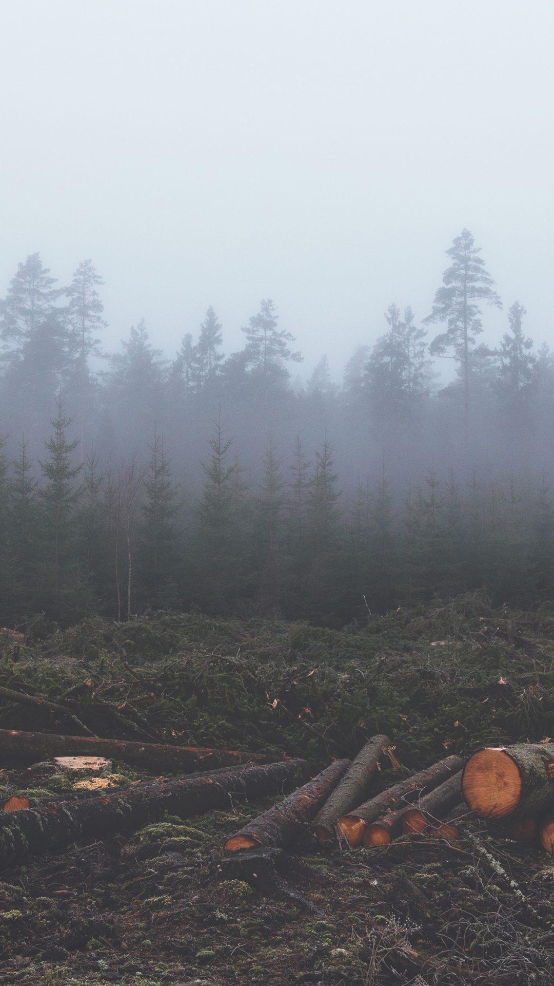 Wood Cut Tree Nature