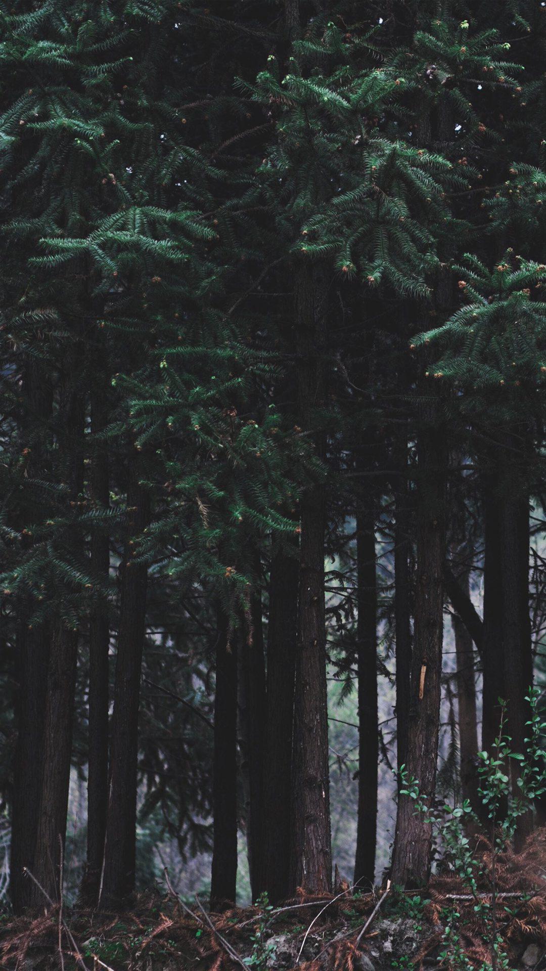 Wood Forest Dark Night Tree Nature