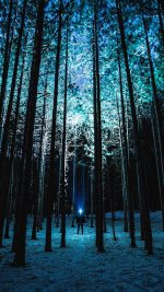 Wood Mountain Nature Blue Night