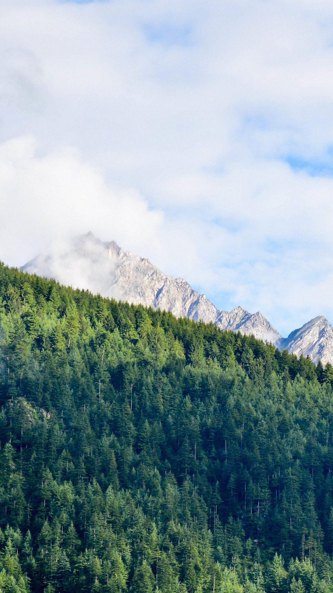 Wood Nature Mountain Blue Green Summer