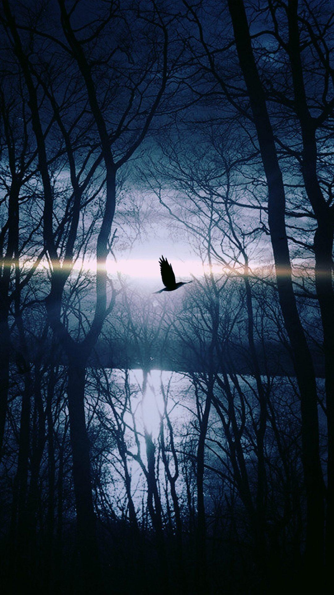 Wood Night Dark Nature Bird Fly Lake