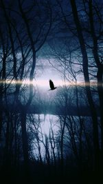 Wood Night Dark Nature Bird Fly Lake