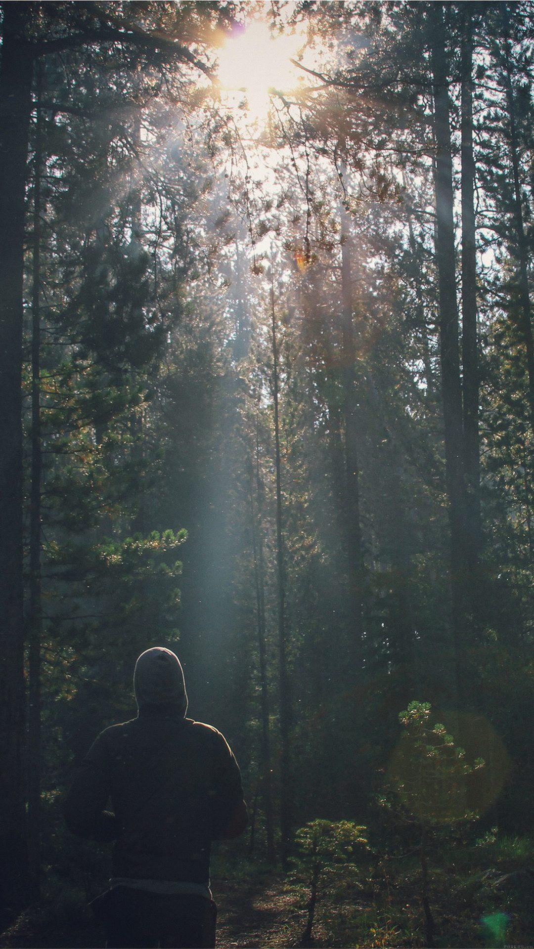 Wood Running Mountain Nature Sunshine Green